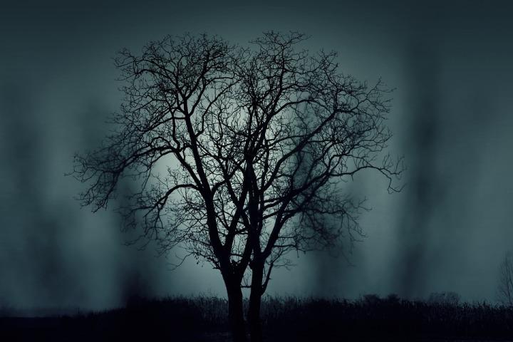 tree-407256_960_720
